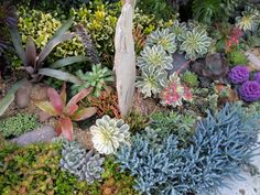 Love the succulents & color contrasts ... Xeriscaped beautifully