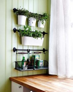 Our dollar tree has the small containers on top in bronze. Maybe use an inexpensive towel rod or paper towel holder. Me Adora, Floating Shelves, Ladder Decor, Vegetable Gardening, Amigos, Plants, Floating Bookshelves