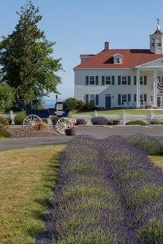 Washington Lavender Farm is a popular Sequim Valley destination between Sequim and Port Angeles. Enjoy oceanfront fields of lavender and wildflowers all summer.