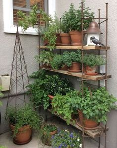 do you want to decorate it? the best way to that is to create a vertical garden wall inside your home. A vertical garden wall, also called a living wall, is a collection of… Continue Reading → Balcony Herb Gardens, Small Herb Gardens, Vertical Gardens, Outdoor Gardens, Balcony Gardening, Indoor Gardening, Small Balcony Garden, Small Courtyard Gardens, Apartment Herb Gardens