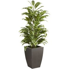 Pier 1 Imports Green Faux Hosta Floor Plant ($150) ❤ liked on Polyvore featuring home, home decor, floral decor, green, outside home decor, pier 1 imports, outdoor home decor and green home decor