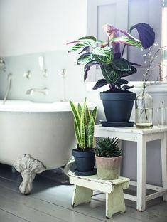 Isabelle Palmer, The House Gardener, Tropical Plants in Bathroom   Gardenista