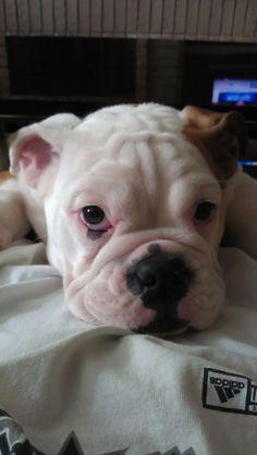 Samone as a puppy ? same color ears =)