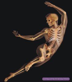 ◆ 뼈는 화강암보다 2배 튼튼하고, 콘크리트보다 4배 더 탄력이 높으며, 강철보다 약 5배 가볍다. ◆ 모든 위대한 건축물들이 그러하듯이 사람의 골격은 아름다울 뿐 아니라 100년 이상 인체라는 부하중량을 견뎌 내고 스트레스, 장력,