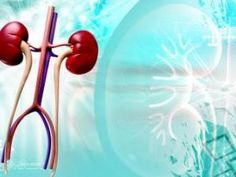 How To Keep Kidneys Healthy With Diabetes