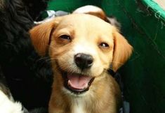 This puppy's smiling! :-D