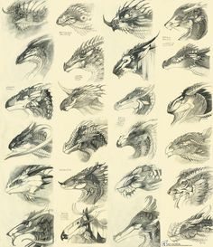 neat study of patterns in various creatures applied to a dragon concept. by WhiteRaven90.deviantart.com on @deviantART
