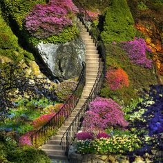 Stairway to Heaven. Butchart Gardens in Brentwood Bay (near Victoria) on Vancouver Island in British Columbia, Canada Stairway To Heaven, Oh The Places You'll Go, Places To Visit, Beautiful Places, Beautiful Pictures, Beautiful Stairs, Beautiful Flowers, Beautiful Scenery, Amazing Photos