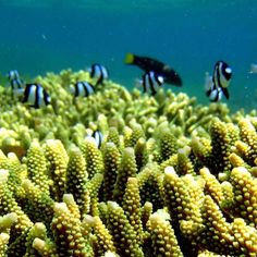 How artificial reef designed by Coral Guardian can improve ecosystem's life in Ocean?