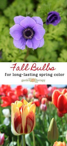 Fall Bulbs to Grow for Spring Color