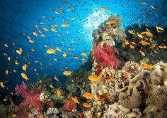Five Reasons to Scuba Dive Egypt's Red Sea: North Africa's Underwater Paradise