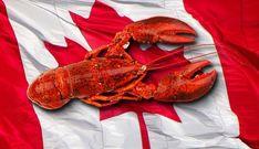 Happy Canada Day. .  #canada #canadaday #explorecanada #canadasworld #canadaswonderland #imagesofcanada #enjoycanada #canadagoose #canadagram #canadalife #canadatravel #canadalove #toronto #pic #gram #canadian #canadatrip #ontario #tourcanada #montreal #ig #explorebc #vancouver #canadagotsole #canadageese #canadafashion #canadaplace #canadagirl #canadatattoo #bhfyp Canadian Lobster, American Lobster, Ontario, Canada Tattoo, Live Lobster, Happy Canada Day, Canada Travel, Montreal, Vancouver