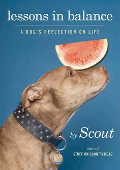 Lessons in Balance: A Dog's Reflection on Life