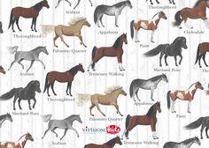 HORSE Pony Palomino Equestrian Lover Printable by VirtuosoKids, $2.00