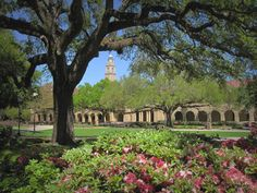 The LSU Campus  Don