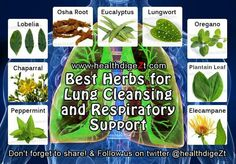 Best herbs for lung cleansing