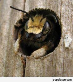 Hôtels à abeilles