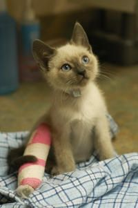 The importance of learning pet first aid!