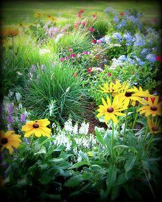 summer perennial border
