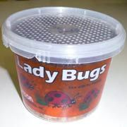 Ladybugs for your garden is an organic way to control pests!