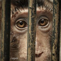 hello sir! will you make me outta here? by Fauzan Shahab on 500px