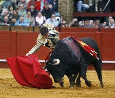 El Juli. La mano diestra. Arjona. Sevilla, 31 de marzo de 2013. Matador Costume, Bull Painting, Spain Fashion, Daily Painters, British Wildlife, Indian Elephant, Mexican Art, Andalucia, Taurus