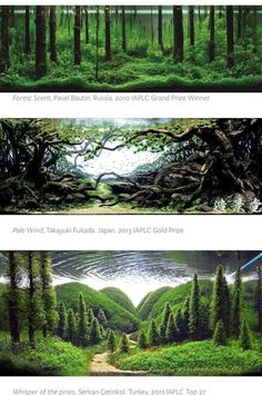 In case you don't know about this: IAPLC - competitive aquarium landscaping competition (see link below for some amazing landscaping) : Aquariums