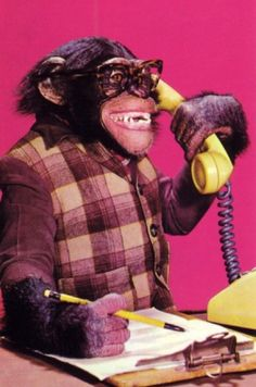 Call centre chimp is waiting to speak with you.