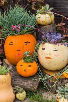 Thanksgiving Time Planters....Sedum is growing in the decorated pumpkins.