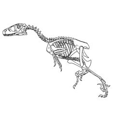fossielen en dino skeletten 0008 diy