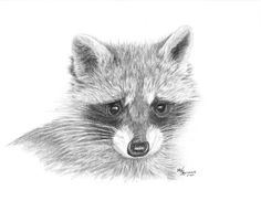 sketches on racoons | Recent Photos The Commons Getty Collection Galleries World Map App ...