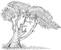 Cypress Tree Drawing