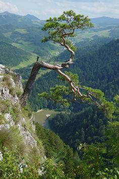 Widok na Dunajec z Sokolicy