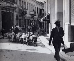 Evangelistrias street, Herd of sheep Greece Pictures, Old Pictures, Old Photos, Vintage Photos, Time Pictures, Athens History, Old Greek, Greece Photography, Photographs Of People