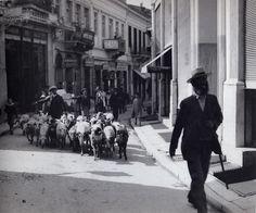 Βοσκός με κοπάδι στην εμπορικότατη (τότε, όπως και τώρα) οδό Ευαγγελιστρίας στη διασταύρωσή της με την οδό Κλείτου (μεταξύ 1903-1909)