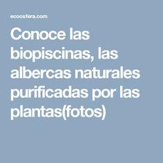 Conoce las biopiscinas, las albercas naturales purificadas por las plantas(fotos)