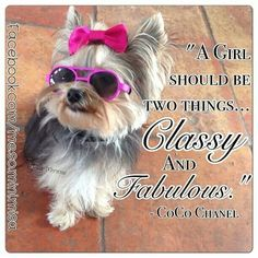 "Yorkie Girl...Coco Chanel Quote: ""A Girl should be two things...Classy and Fabulous"" ~Coco Chanel"