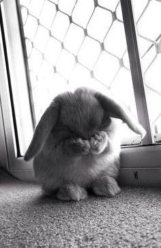 cute shy bunnie