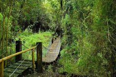 Senderos del Parque Coyanmahuida