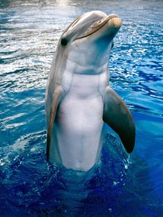 Dophin!!!!! Love love dophins. Another one of God's beautiful creations.