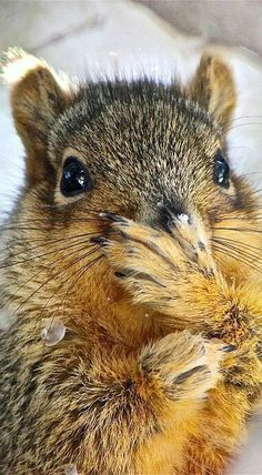 Squuze me!  I have eaten too many peanuts.