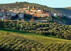 Colletorto - Hyggelig landsby i Molise  Colletorto er en lille bitte by i det sydvestlige Molise, tæt på grænsen til Puglia. Byen er en lille times kørsel fra regionens hovedstad, Campobasso, og er I ved vandet ved Termoli, har I den samme afstand, altså en lille times kørsel.   Ferie