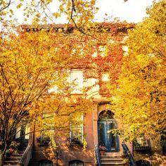 Autumn in Brooklyn by Vivienne Gucwa @travelinglens | New York City Feelings | Bloglovin'