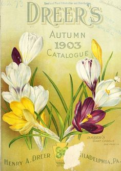 Front cover of 'Dreer's Autumn Catalogue' 1903 with an illustration of Dreer's Giant Crocus.