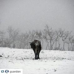 El periódico británico @guardian trata la nevada en #Galicia publicando esta foto de #Montederramo #Ourense en su #Instagram #SienteGalicia  Photo: Brais Lorenzo/EPA