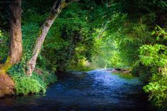 Water and trees at Stayton Ditch in Stayton Oregon