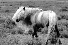 spiritual horse