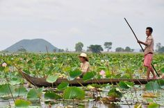 Lotus Farm by Samatoa (spinning and creating a lotus thread by extracting the fibers from the lotus stem) - Siem Reap, Cambodia