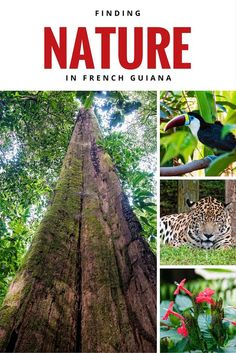 French Guiana is France's most biodiverse region but it can be hard to spot species in the wild. We share 3 easy ways to see Guyane's nature up close and personal. #rendezvousenfrance #Frenchoverseasawards