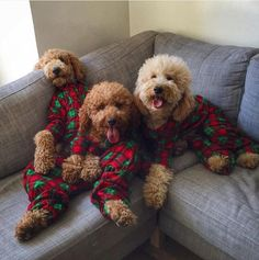 Coordinated: The dogs have become massively popular thanks to their adorable posts, including some seeing them wearing matching outfits